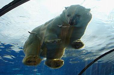 Detroit Zoo Arctic Ring Of Life Hatzel Amp Buehler